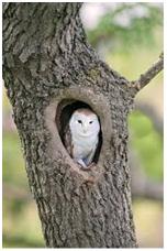 An owl sat in a tree